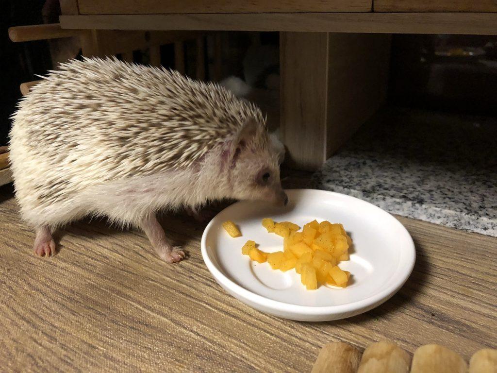 ご飯(ハリネズミ)