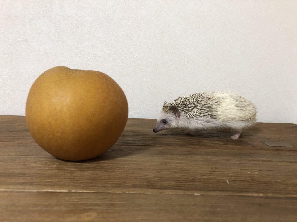 しぐさ(ハリネズミ)