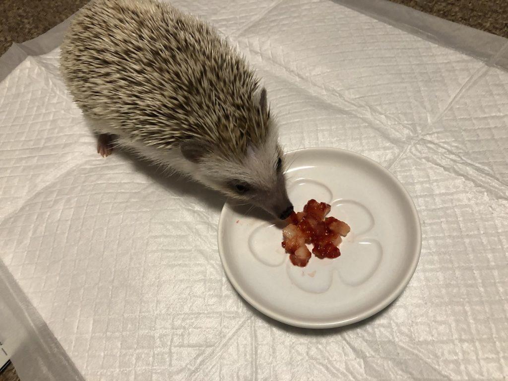 果物(ハリネズミ)