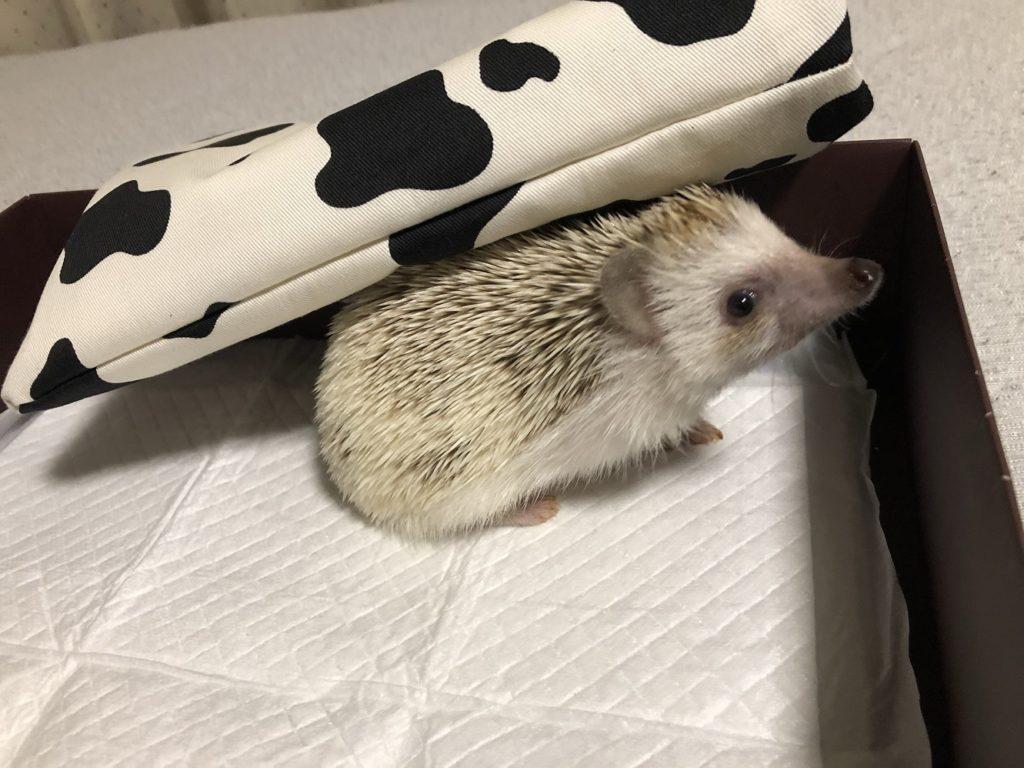 寝袋(ハリネズミ)